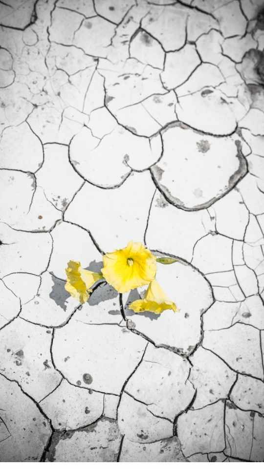 Bloom Where You Are…and Grow
